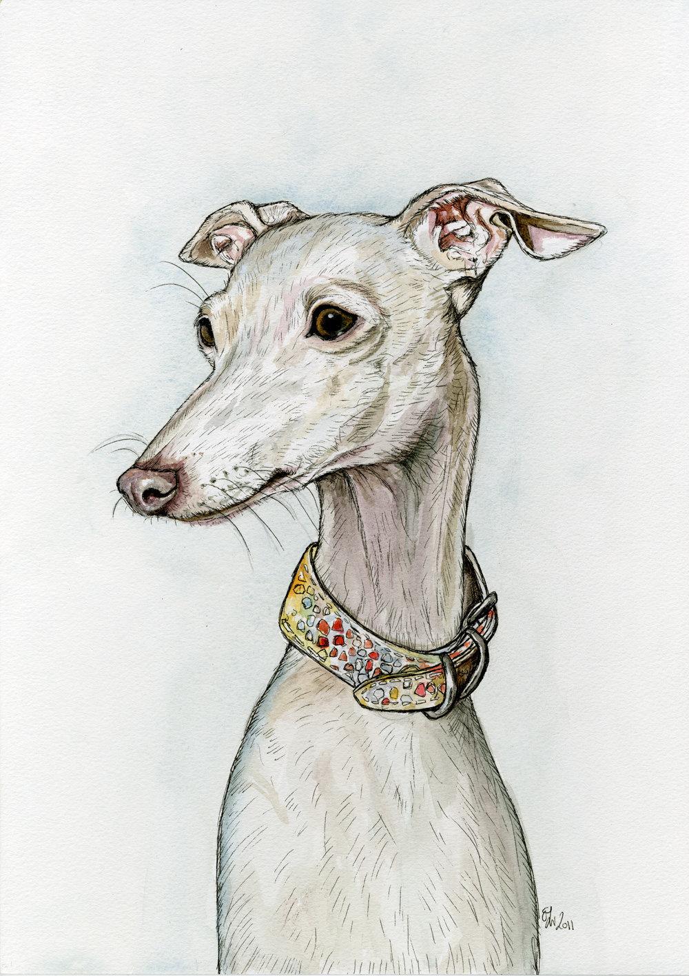 Dessin Chien Greyhound