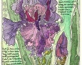 Purple Iris with Shakespeares Sonnet 54 ACEO from Theodora