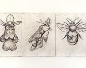 bee and orchid