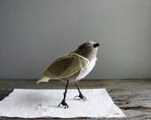 small, tame bird
