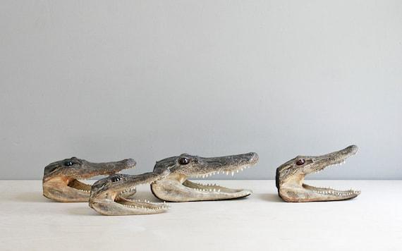 taxidermy alligator head / curiosity cabinet