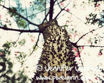 Nature Photography - Tropical Tree 20 x 30 inches LARGE FORMAT poster print by Jennifer Jackson - PixelGrin