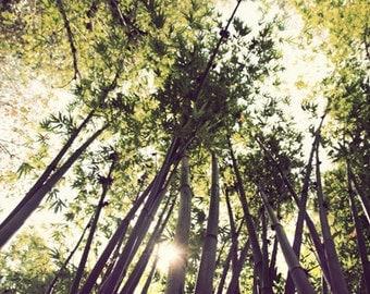 Zen Art, Bamboo Decor, Fine Art Photography Print by Jennifer Jackson - Mellow Green & Yellow Home Decor