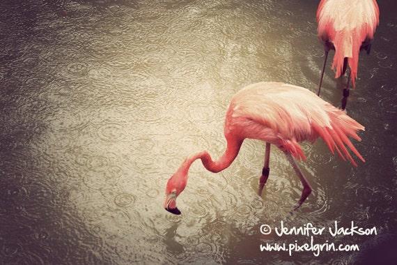 Pink Flamingos Large Format Photography, tropical birds, neutral decor, brown, salmon, flamingo photography, pink birds