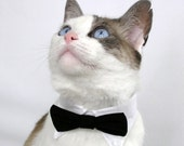 RESERVED For sturnsfrost ONLY - Black Pet Bow Tie (S)