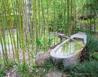 BAMBOO GARDEN - 8 x 10 Green Bamboo & Stone Boat Fine Art Photo Print