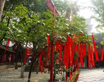 WISHING TREE, red ribbons on tree, 8 X 10 Fine Art Photo Print