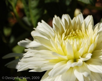 EXHALE - 8 X 10 White Flower Fine Art Photo Print