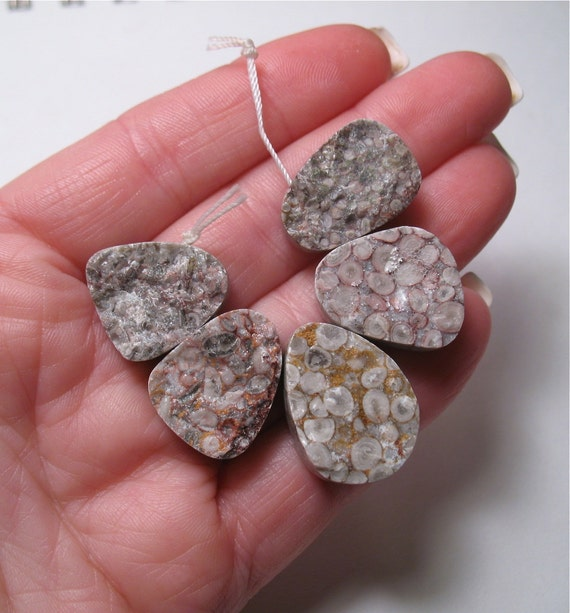 Millions Of Years Old Colorful Fossilized Coral Druzy Hammered Briolette Set