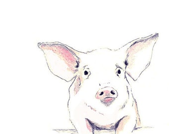 Pig Drawing  - Some Pig