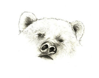 Print of Original Bear Drawing  - Sleepy Bear - Bear Art