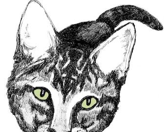Hello Cat  - Cat Art