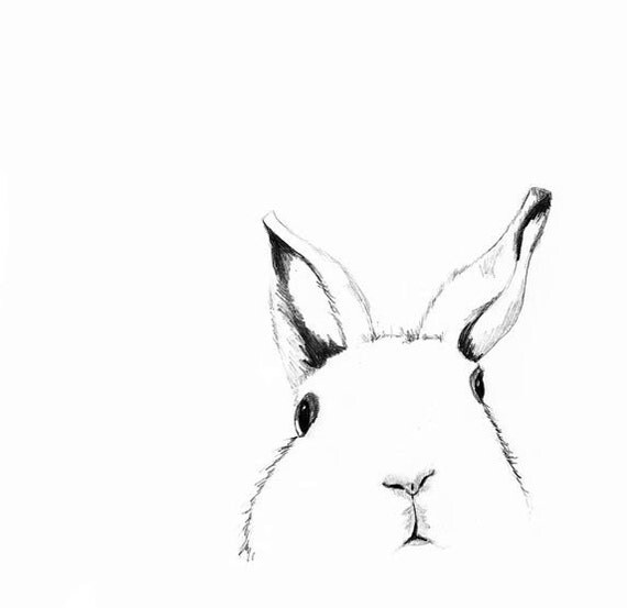 Line Drawing Of Rabbit Face : White rabbit drawing where s alice children