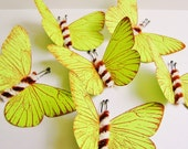 Chartreuse green/ Foxy brown and cream Twist Vintage style classic Butterflies