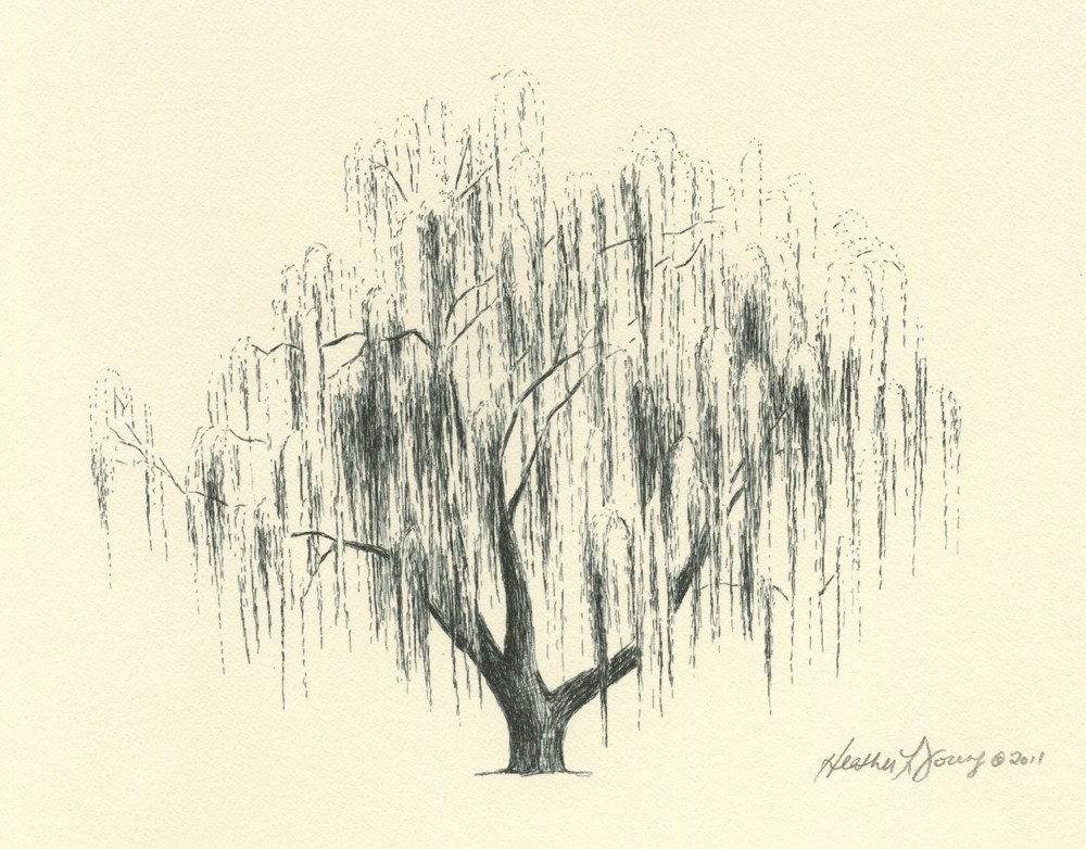 Reserved For Amanda Weeping Willow Tree Drawing Aurora No 2 In