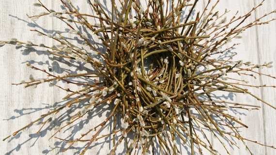Spring Wreath - Pussy Willow Wreath - Fresh Natural Handwoven - FIRST DAY of SPRING