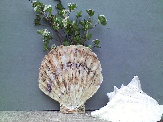 Shell Wall Planter