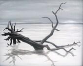 Driftwood giclee print