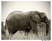 Mama and Baby African Elephant Original Fine Art Photography Print 8 x 10