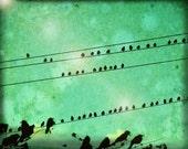 Bird Convention - Original Signed Fine Art Photograph - Julie Kruger