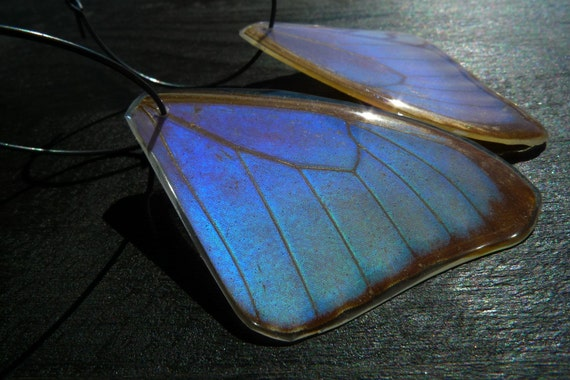 REAL preserved Morpho Lympharis butterfly wing Earrings by Beijo Flor