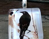 Raven Glass Tile Pendant