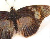 Iridescent butterfly necklace - 15% off Sale