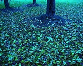A Further Meditation on Autumn - a photograph