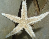 Sparkly Starfish Ornament in Gold