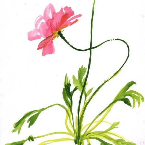Coral Poppy - original painting