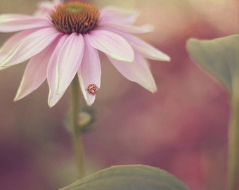 Nature Photography - Garden Echinacea Coneflower Photo Ladybug Insect Bug Print Nature Pink Nursery Girls Room Art Floral Flower Print