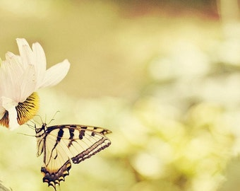 Nature Photography - Yellow Nursery Butterfly Photo Nature Insect Bug Print Romantic Decor Fine Art Photograph Swallowtail Photo