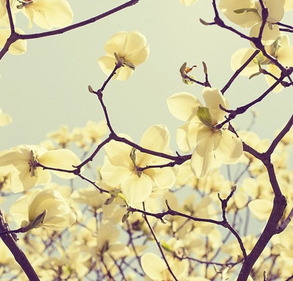 Magnolia Photo Spring Blossom Yellow Flowering Tree Branches Nature Spring Print Blue Sky Nursery Decor Magnolia Blossoms Yellow Spring Art