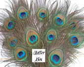 10 Short Peacock Feathers 12 inches Long. Free Postage and Packing