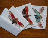 Beautiful Insect Cards