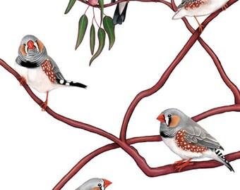 Zebra Finches Print 8x10