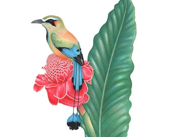 Turquoise-browed Motmot Print 8x10