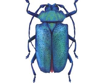 Longhorn Beetle Print 8x10