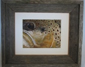 Framed Brown Trout Limited Edition Print