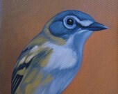 Blue Headed Vireo. Mini Bird Portrait.
