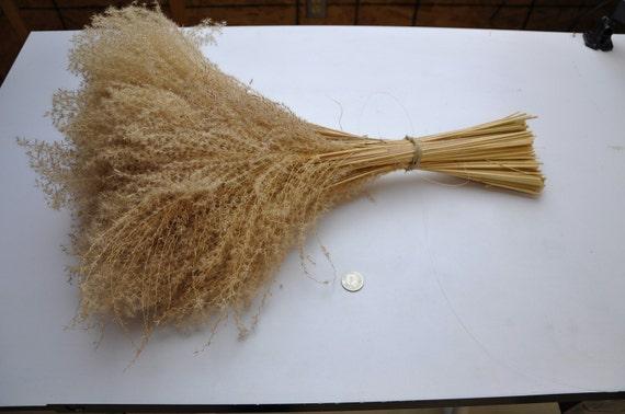 Items similar to bunch ornamental grass beach sea grass for Ornamental sea grass