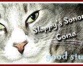 Slappys Sonoma Coma Catnip Organic