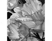 Daffodils- Original charcoal drawing matted and framed at 16x20 - NOT A PRINT