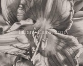 Reserved for rfinnart : Rejuvenation 2 - 12x15 charcoal matted at 16x20