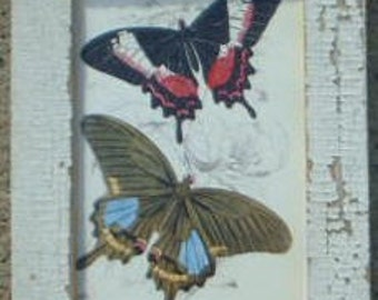 Butterfly Group Print Recycled Wood Frame SBF01