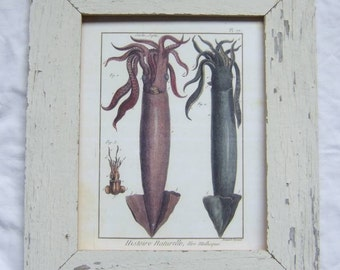 Coastal Sea Life Wildlife Print Recycled Wood Frame
