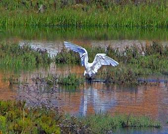 The surreal Egret landing ~