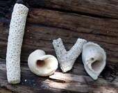 Inspirational Love Shell Photograph 5X7 Print