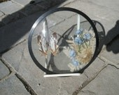 Vintage Butterfly Specimen sealed in Convex Bubble Glass Circa 1970s
