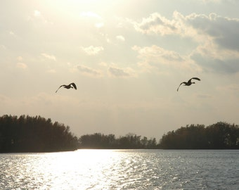 Birds Flying in Autumn
